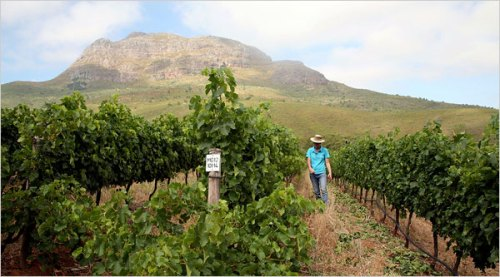 De Treffen Winery in the Stellenbosch region on South Africa